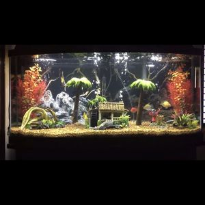 Fish Tank 72 Gallon Includes Everything 300$ for Sale in Bayonne, NJ