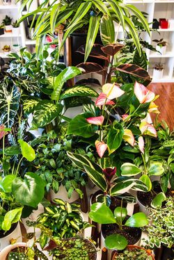 Gorgeous Indoor Plants & Pots in Hayward !! for Sale in Hayward,  CA