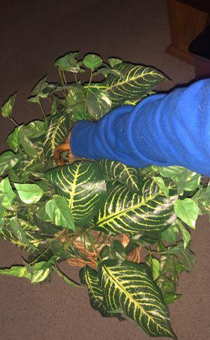 Pretty medium size Fake Decorative Plant for Sale in Plymouth, MI