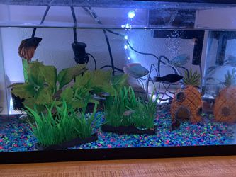 10 Gallon Fish Tank for Sale in Fallbrook,  CA