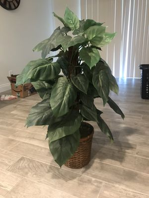 Fake plant for Sale in Placentia, CA