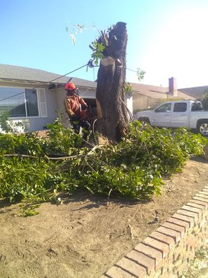 If someone wants tree work we do your service just sent me a message for Sale in Highland, CA