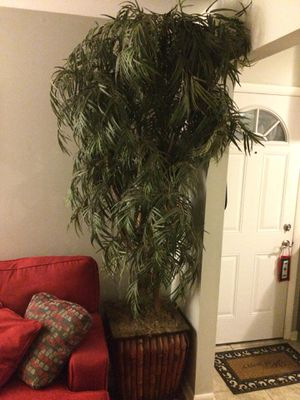 Large Ficus - fake plant for Sale in Nashville, TN