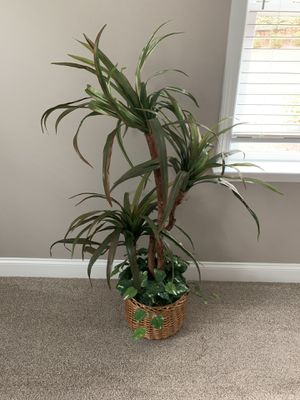 House plant for Sale in Woodstock, GA