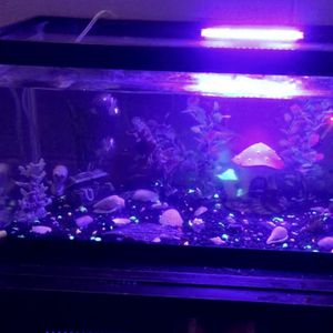 Fish Tank for Sale in Hobart, IN