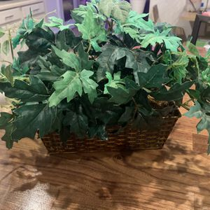 Fake Ivy Plant for Sale in Mesa, AZ