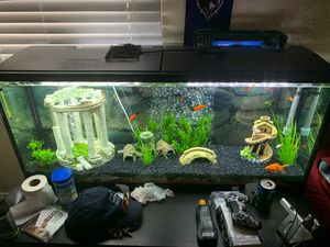 Fish tank with fish and decor for Sale in Reisterstown, MD