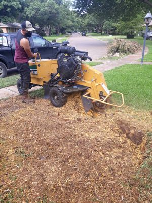 STUMP GRINDING for Sale in Dallas, TX