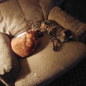 Cat's for Sale in Westport, WA