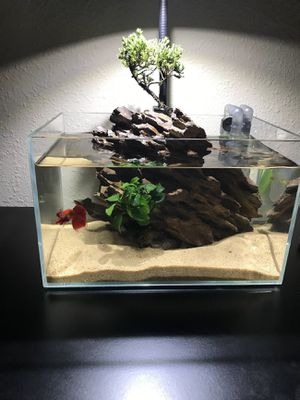 3 gallon rimless aquarium and dragon stone for Sale in Land O' Lakes, FL