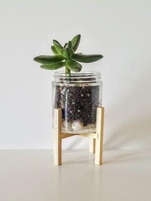 mini-plant stand for Sale in Chicago, IL