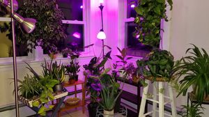 House plants for Sale in Fitchburg, MA