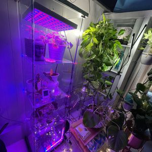 Glass Cabinet Plant Greenhouse for Sale in Los Angeles, CA