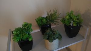 Faux Succulent Plants for Sale in Portland, OR