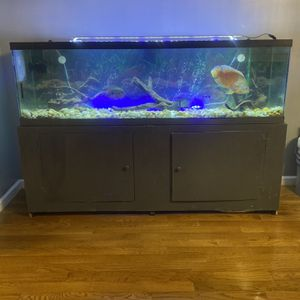 125 Gallon Fish Tank for Sale in Woodmere, NY