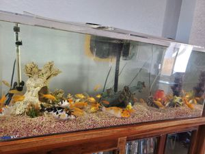 55 Gal fish tank, koi fish and food for Sale in Del Sur, CA