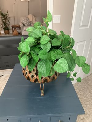 House plant and basket for Sale in Roswell, GA