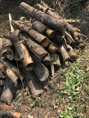 Free firewood for Sale in Lexington, KY