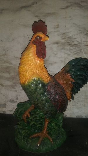 Rooster for Sale in Harrisburg, PA