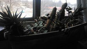 Cactus plants for Sale in Elmira, NY