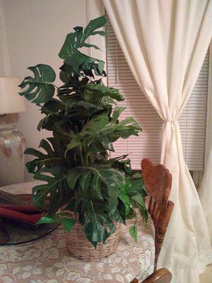 Plant fake for Sale in Skokie, IL