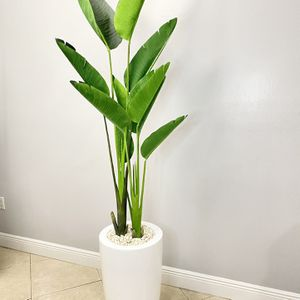 Modern Plant White Base for Sale in Hialeah, FL