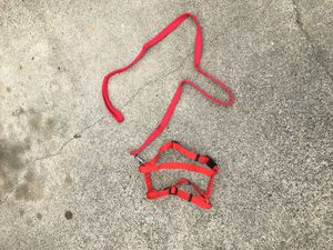 Harness and Leash for Sale in Tacoma, WA