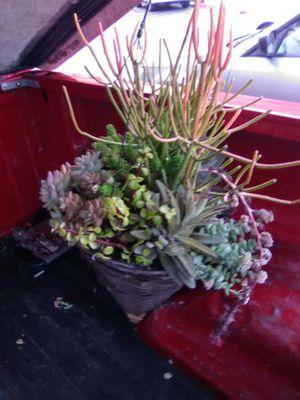 Beutiful succulent arrangement in hanging basket for Sale in San Marcos, CA