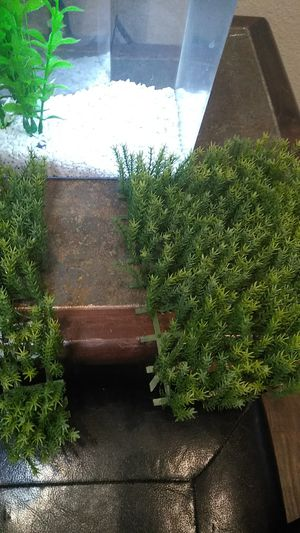 Artificial Guppy Grass Decoration for Fish Tank for Sale in American Canyon, CA
