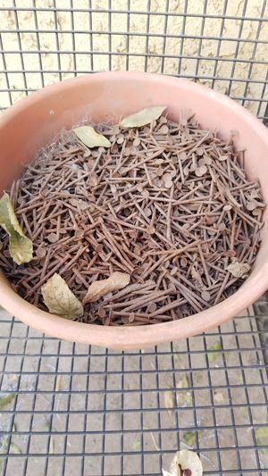 Flower pot of rusty nails free for Sale in Downey, CA