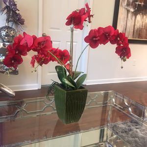Rosey Red Plant for Sale for Sale in Atlanta, GA