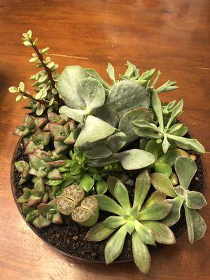 Succulent garden arrangement for Sale in Las Vegas, NV