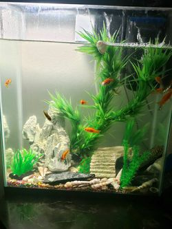25gal Fish Tank Aquarium Betta Tanks for Sale in Fresno,  CA