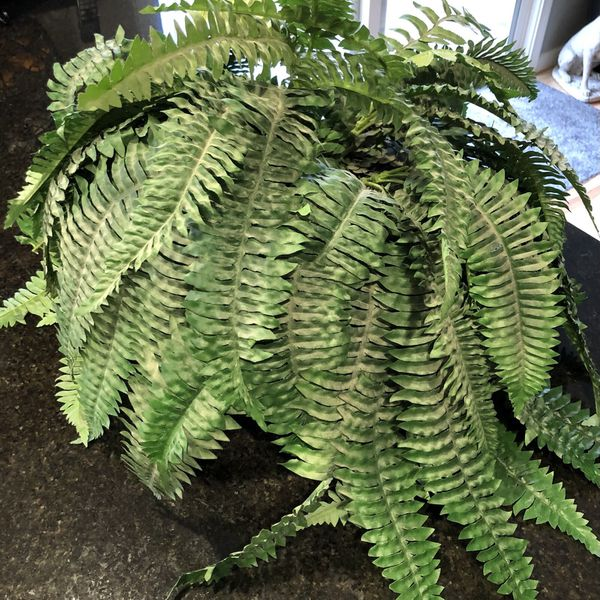 Artificial Fern Plant