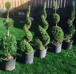 Plant Scultures for Sale in Hillsboro, OR