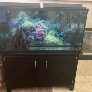 60 Gal Fish Tank for Sale in Fontana, CA