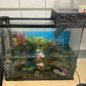 40 Gallon Aquarium With Everything Needed For A Aquarium for Sale in Los Angeles, CA