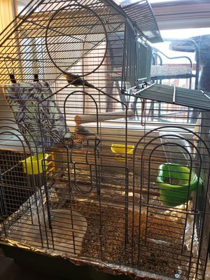 Free 2 finchs and bird cage snohomish wa for Sale in East Wenatchee, WA