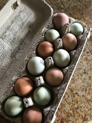 Fresh organic eggs for Sale in Vista, CA
