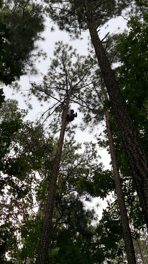Affordable Trimming or removal tree for Sale in Lawrenceville, GA