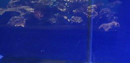 220 Gallon Tank for Sale in Cape Coral,  FL