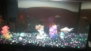 10 gallon fish tank w/decorations, for Sale in Ripon, WI