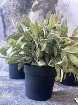 Fake plants for Sale in Encinitas, CA