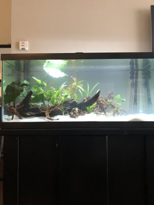 Fish tank 40gallon for Sale in Beverly Hills, CA
