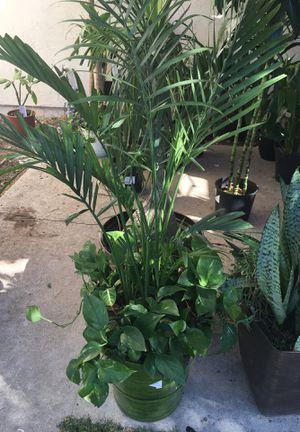 Indoor plants for Sale in Spring Valley, CA