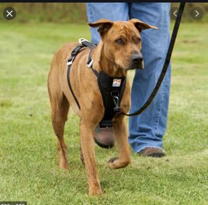 Kurgo Dog Safety Harness And Seat Belt for Sale in Palo Alto, CA