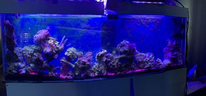 20g wall fish tank for Sale in Irving, TX