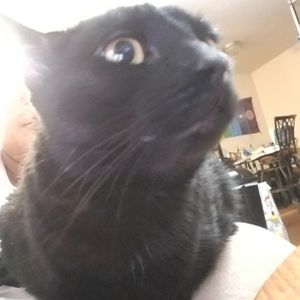 Free 3 Year Old Male Cat for Sale in Columbia, SC