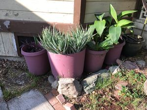 Potted plants for Sale in Los Angeles, CA