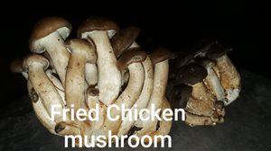 fried chicken mushroom for Sale in Gresham, OR